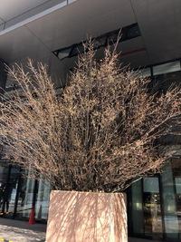 2018年3月15日(木) 還暦おじさんの突然のひとり暮らし奮闘記:ディスカッション仲間に感謝