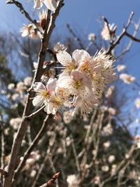 2018年3月24日(土) 還暦おじさんの田舎実家暮らし奮闘記:八日目