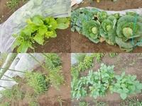 家庭菜園から畑へ