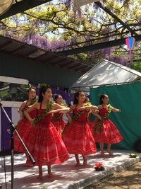 国領神社藤まつりで今年も踊ります