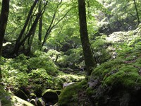 ハイキング客で賑わう新緑の高尾山で若葉まつり開催中。フラチナリズムも登場! 2014/05/01 08:00:00