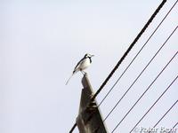 【羽田空港】展望デッキのハクセキレイと雀です♪