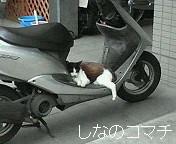 猫の寝姿で和みました(^^*
