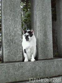 大国魂神社で出会う猫さん(^ ^*
