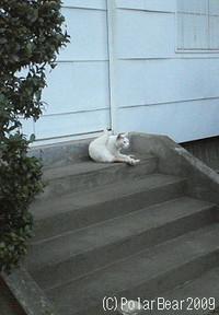哲学堂の猫さん-= ☆
