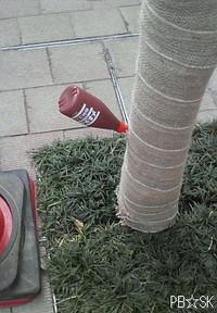 ロータリーに植えられた木に