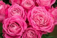 4月・5月の春のキャンペーンは「花」をテーマにしたコース