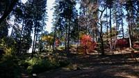 高尾山から南高尾を歩いてきました。2017年11月