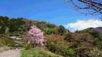 生藤山から奥高尾を縦走しました。2018年4月。
