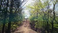檜原都民の森から御前山で道に迷いました。2018年4月。