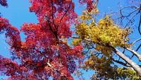 紅葉が見頃の高尾山、混雑を避けられる時間とコースは? 2016/11/22 18:00:00