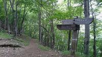 鷹ノ巣山を歩きました。2017年6月。