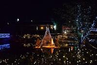 ハーモニー君 京王フローラルガーデンアンジェクリスマスイベントに行った来ました!