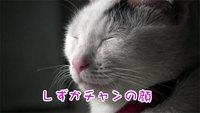 しずかチャンのおすまし顔 2018.1.27(土)