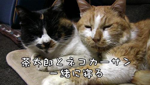 茶太郎ネコカーサン