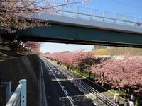 河津桜で春を感じて