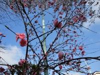 桃それとも桜