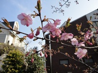グリーンロードに春が来ました