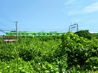 フォトジェニック?八王子市山田町のジャングルと緑の京王線