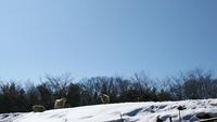 大雪後の磯沼牧場はやっぱりフォトジェニック♪