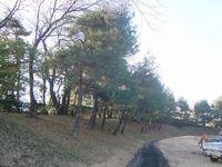 ゴルフ場の樹木剪定・伐採