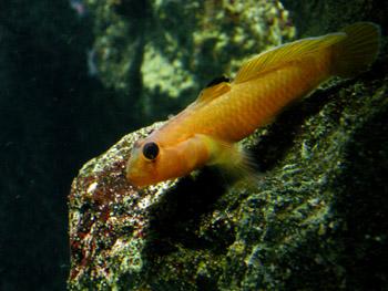 葛西臨海水族園の魚