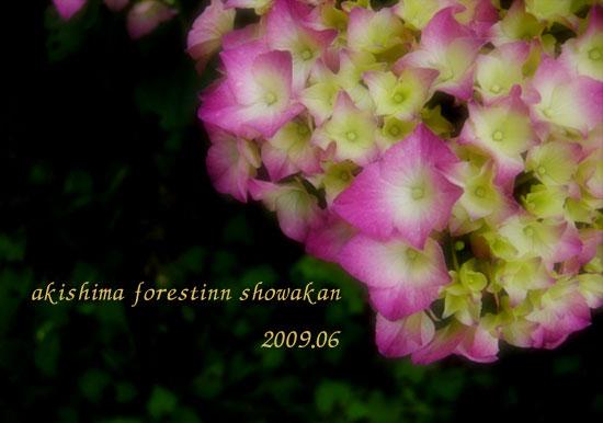 昭和館紫陽花1