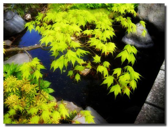 昭和記念公園新緑1