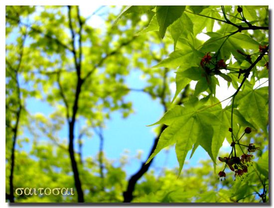 昭和記念公園新緑2