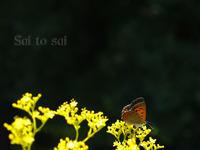 蝶の数え方