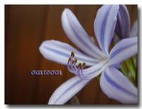 「彩と菜」の花壇2