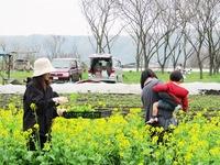 夏野菜畑の準備