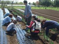 農園体験受け入れは大成功でした