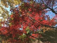 神代植物公園の紅葉が見ごろ…