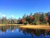 大雪山国立公園の紅葉