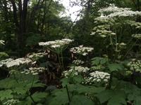 菜の花畑をあとに 丸加高原へ 新緑ウォーキング