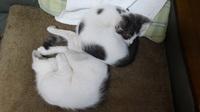 ユーロードの猫スタッフ